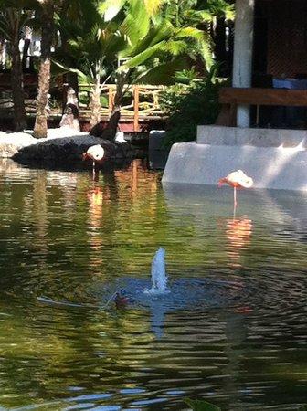 Paradisus Punta Cana: Pink flamingos