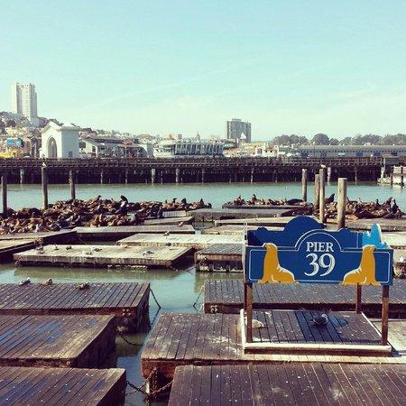 "Fisherman's Wharf: The ""boys"""