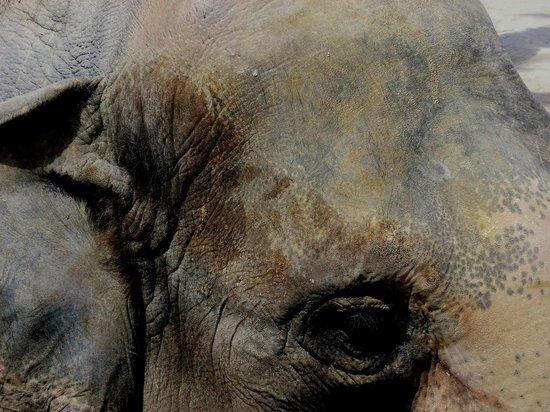 Terra Natura : Elefanta