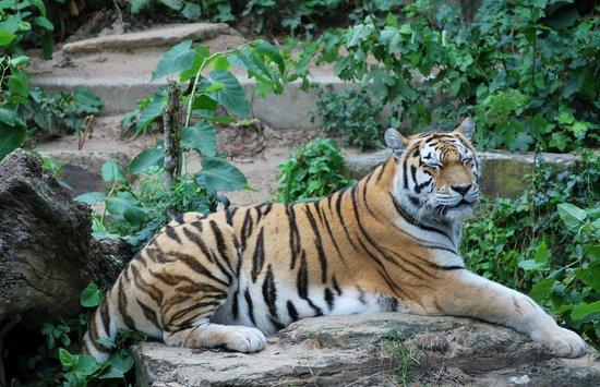 Antwerp Zoo (Dierentuin): een van de vele mooie roofdieren