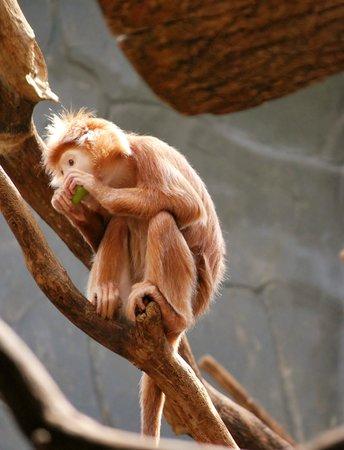 Antwerp Zoo (Dierentuin): leuk