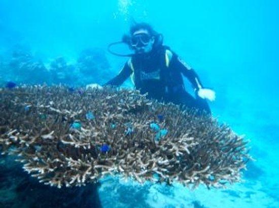 El Nido Resorts Miniloc Island : Scuba Diving