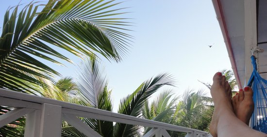Conch Shell Inn: RELAX after diving/snorkeling & watch pelicans & doves fly over your hammock all afternoon...