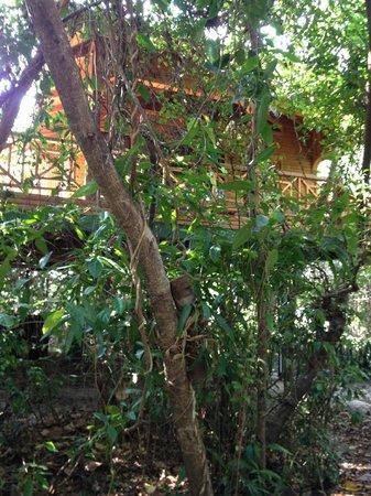 Hamanasi Adventure and Dive Resort : Treehouse 25