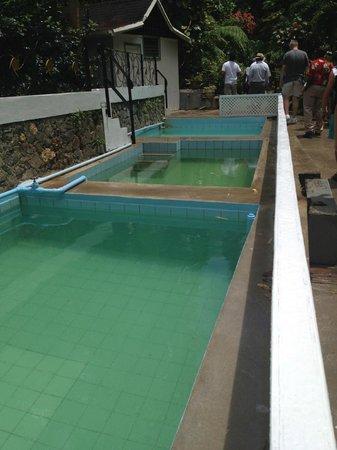 Diamond Botanical Gardens: Mineral baths