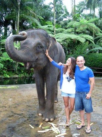 Elephant Safari Park & Lodge: clean the elephant