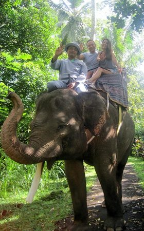 Mason Elephant Lodge : walking with elephant