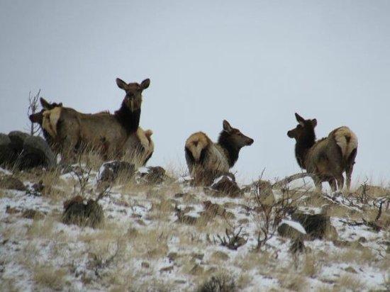 Chedsey Motel: Elk on Walden's north mountains