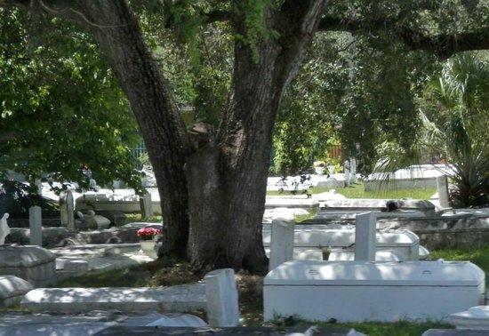 """Miami Tour Company: Il cimitero di """"Thriller"""" di Micheal Jackson"""