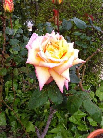 La Table du Meunier: Qu'elle sentait bon cette rose !