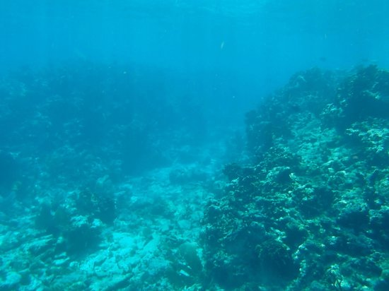 Tobacco Caye Paradise : Coral canyons.  Probably about 30 feet of water, pretty impressive.