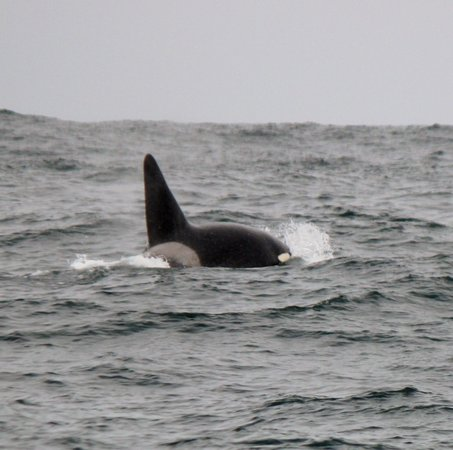 Monterey Bay Whale Watch : `We need a Bigger Boat'