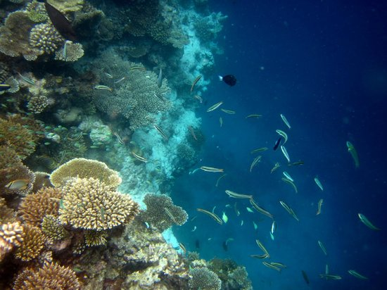 VOI Alimatha Resort: snorkeling