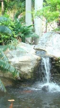 Embassy Suites by Hilton Fort Lauderdale 17th Street: Fish Pond and Garden Area