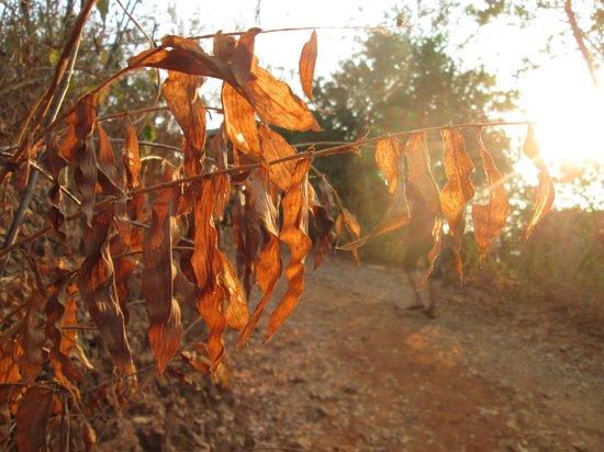 Casa Pan de Miel : Camino a Punta Cometa