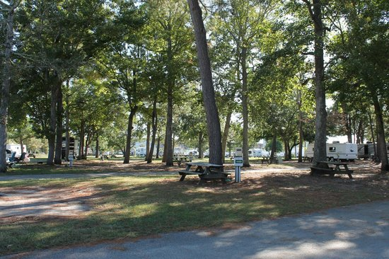 Ocean Lakes Family Campground: shaded camping sites