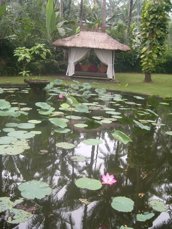 Rama Candidasa Resort & Spa : Pond with lotus
