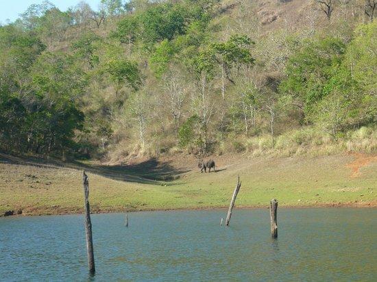 Aranya Nivas KTDC : Elephant in Jungle - from Boat