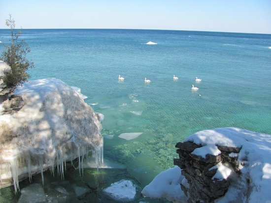 Bridgeport Resort: Coastal view with Mute Swans