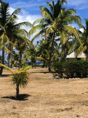 Nisbet Plantation Beach Club: taken from outside the door of our cottage
