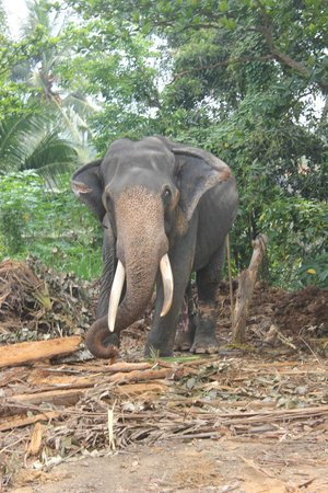 Hotel Hibiscus Beach: прогулка на слониках