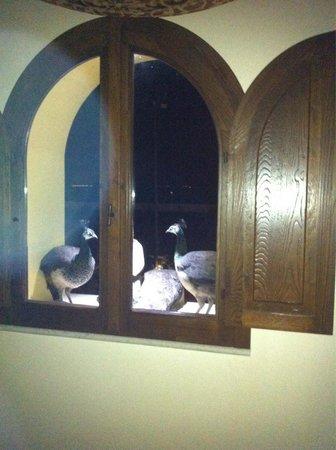 Tenuta San Francesco : I pavoni ospiti dell albergo