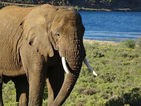 Sanbona Wildlife Reserve: on safari
