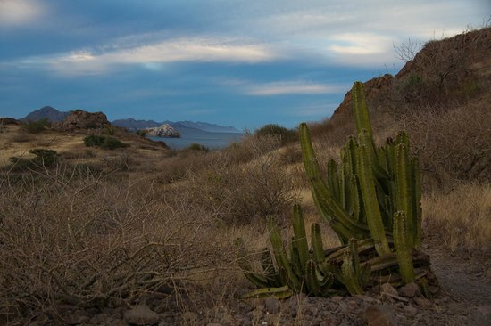 Villa del Palmar Beach Resort & Spa at The Islands of Loreto: Hiking trail looking towrd Sea of Cortez