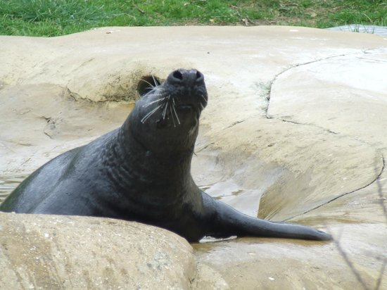 Mablethorpe Seal Sanctuary and Wildlife Centre: Waiting for the fish