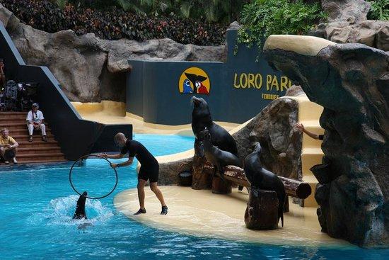 Loro Parque: Шоу морских котиков
