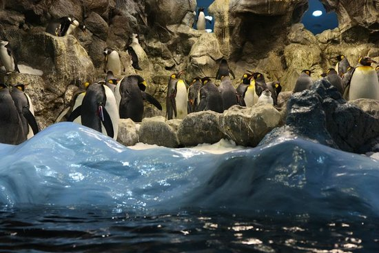 Loro Parque: Пингвины