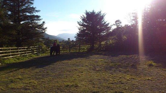 Rostrevor Holidays: Horseriding
