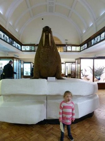 Horniman Museum and Gardens: Nanna...look it's massive