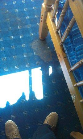 Edinburgh Backpackers Hostel: Der Teppich im Zimmer
