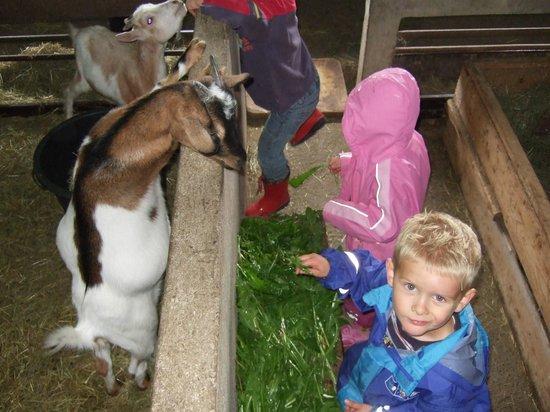 Kinderferienhof Bergblick: Ziegen beim Füttern