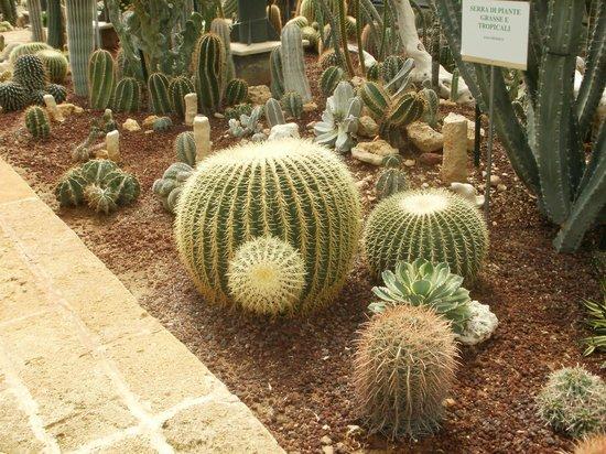 La serra delle piante grasse foto di la cutura giardino for Serra piante grasse