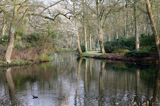 Rhododendronpark Bremen : Im März 16