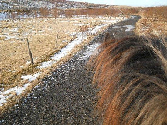 Laxnes Horse Farm : Along the trail