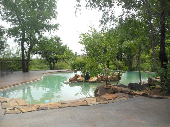 Impodimo Game Lodge: La piscine