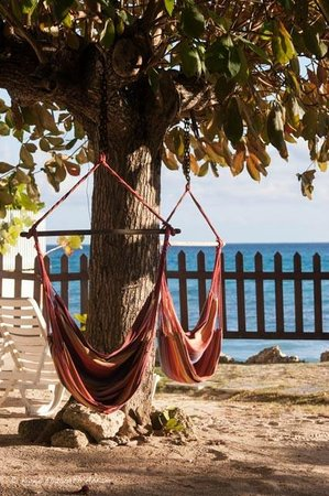 Maxwell Beach Apartments: the almond tree and hammocks in front of the apartment