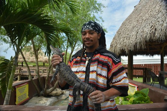 Miccosukee Indian Village: Let's hold a baby gator