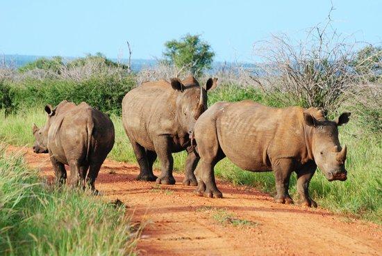Impodimo Game Lodge: Rhinocéros