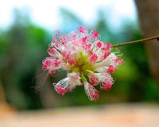 Churute Mangroves Ecological Reserve: Belleza de flor, Monoloco, Churute