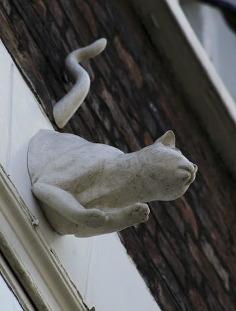 York Cat Trail: Cat at the Golden Fleece