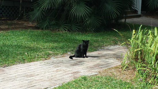 Collier County Museum : resident cat