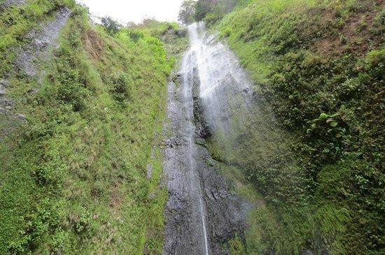 Finca Mystica: Cascada San Ramon