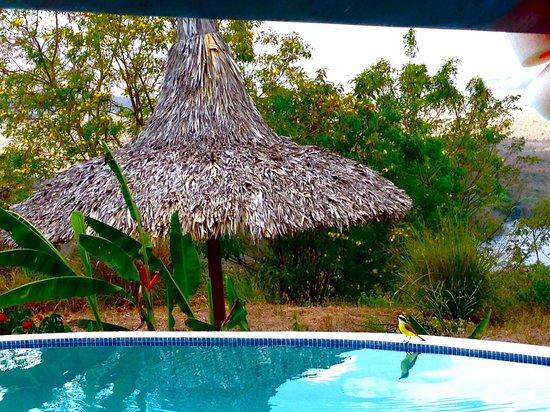 Hacienda Puerta Del Cielo Eco Spa: Poolside with the National Bird