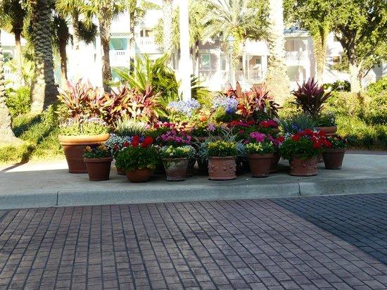 Disney's Old Key West Resort : Flowers at main bus stop