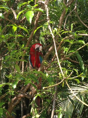 Excellence Punta Cana: Gardens