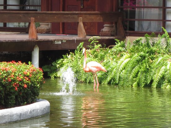 Paradisus Punta Cana Resort : Flamingo' s